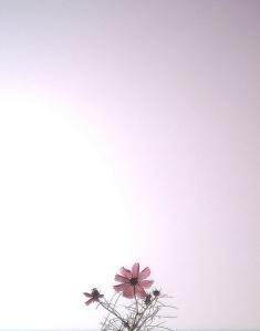 Thezephyrsong - Flower (dari flickr.com)