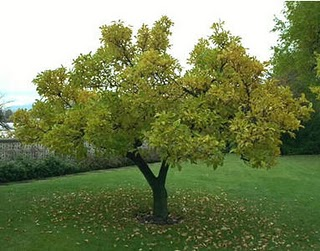 http://surganet.blogspot.com/2011/04/benarkah-pohon-bisa-bicara.html